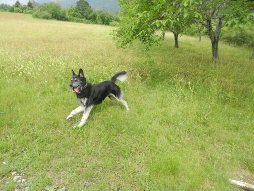 Balade canine du 10 juin 2012