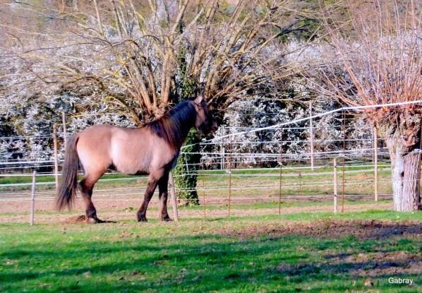 z07 - Un cheval