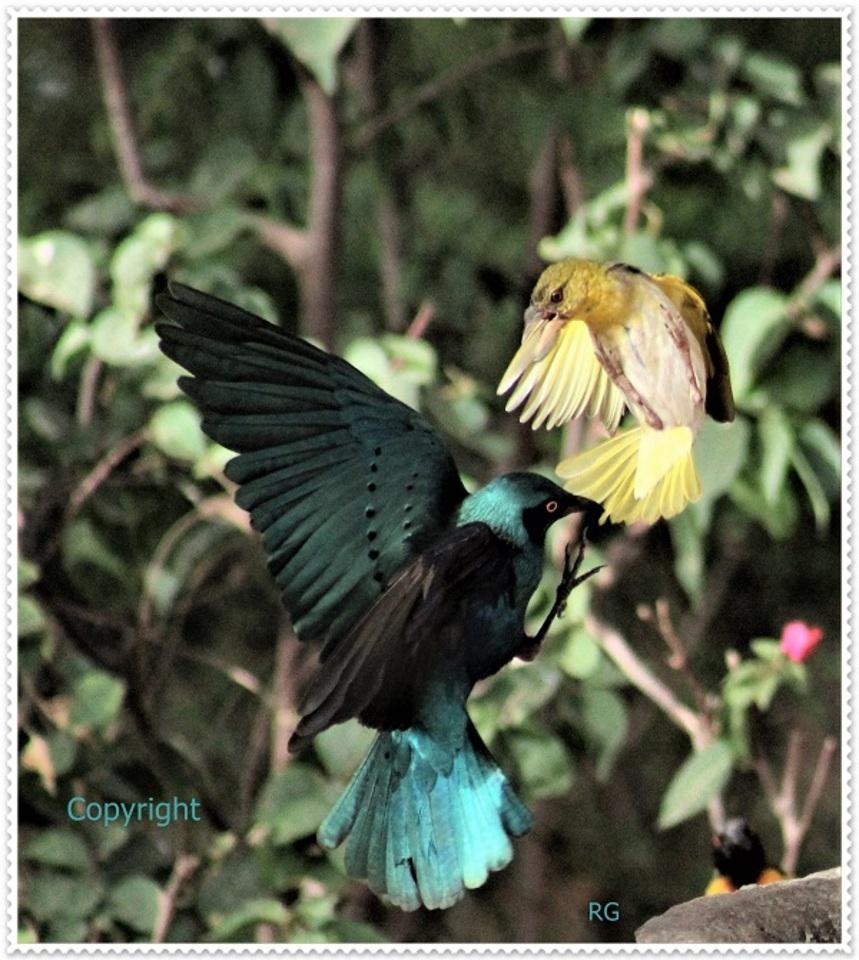 Oiseaux du Sénégal