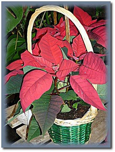 jardinerie 11 2010 6