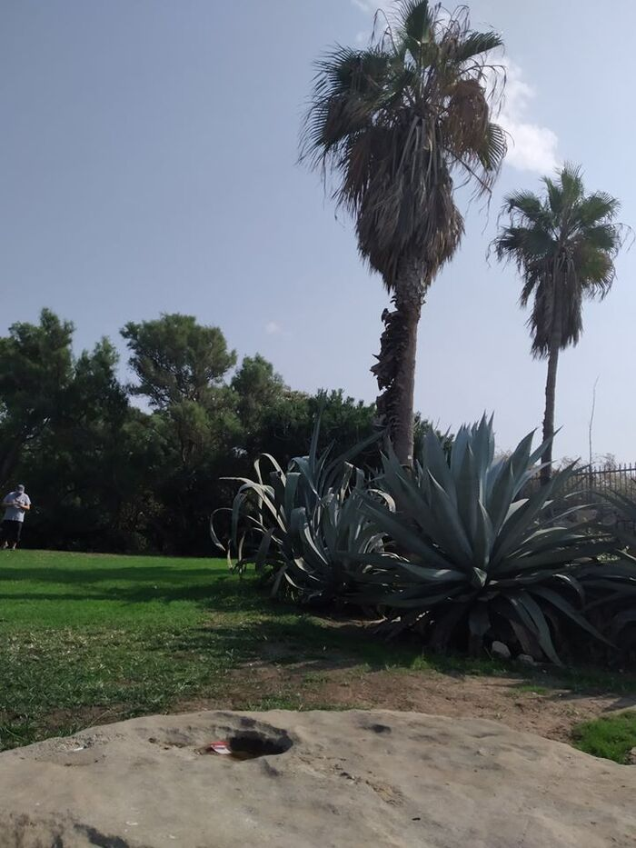 ISRAEL PHOTOS D'UN AMI Y ETANT ALLE EN JUIN 2019   (5)