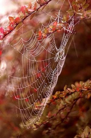 Brises d'automne ...