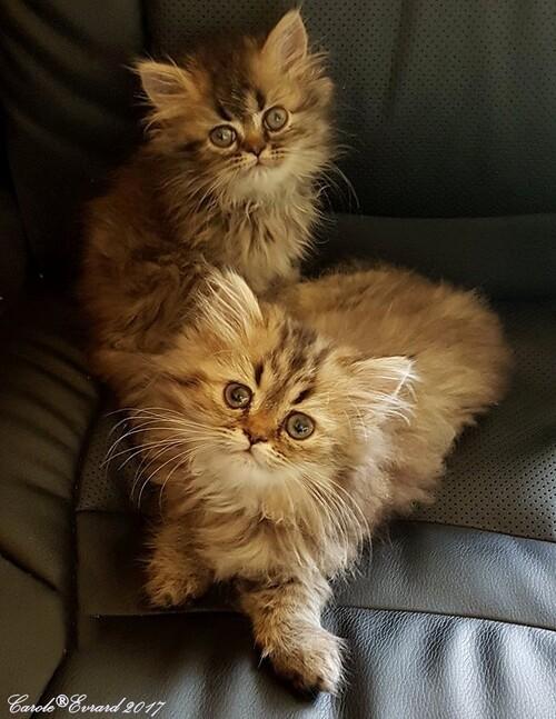 Naya & Nevee, mes fifilles d'amour