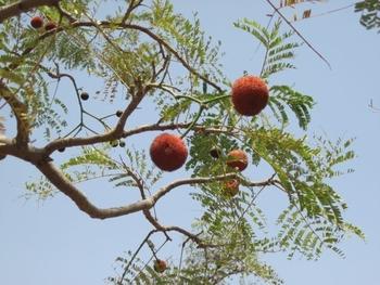 Burkina Pompoms du Néré