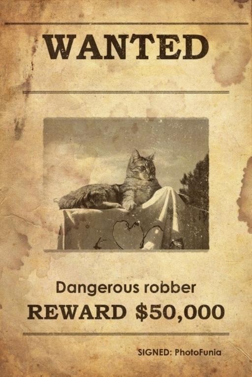 Wanted ! Récompense assurée à qui retrouvera & rapportera aux Chats du Maquis les Deux Li !