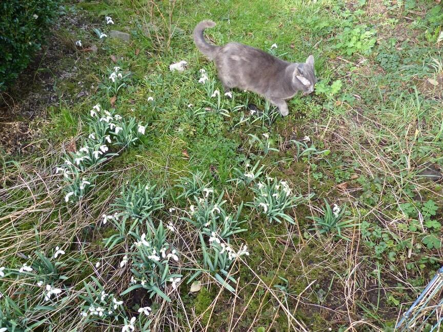 Un petit air printanier dans mon jardin