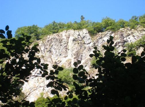 St-Etienne-de-Chomeil : la beauté méconnue de la forêt d'Algères