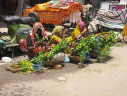 Dakha, Bangladesh! (nov 91, deuxième partie)