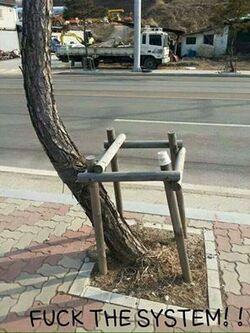 De le rebellion chez les arbres ...