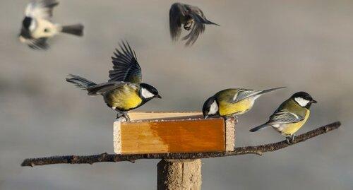 L'hiver , une période crucial pour nos amis les oiseaux .......