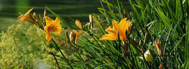 Jardin Les Hydrangea