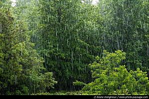 Voie sèche et voie humide