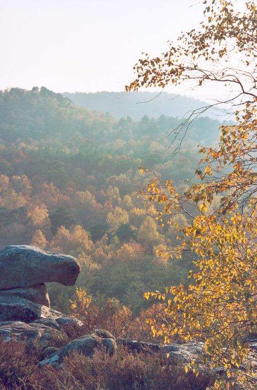 L'automne en forêt de Fontainebleau ...