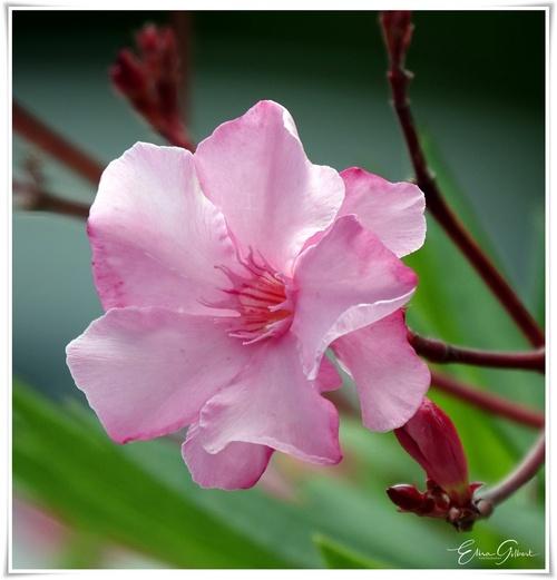 Dans l'intimité des fleurs