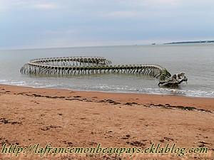 Un serpent sur la plage de St Brevin