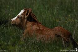 Vache et son nouveau né