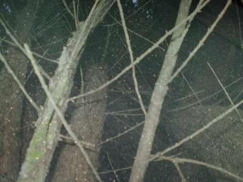 surimpression-arbre-givr-.jpg