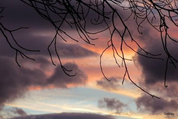 Q06---Ciel-et-branches.JPG