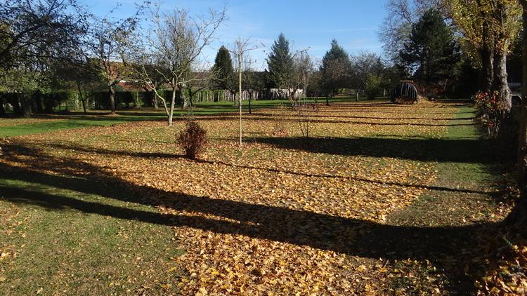 Novembre dans nos Jardins