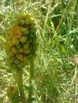 Hirondelle_jardin_naturel__10_