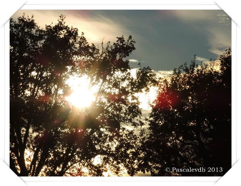 Promenade en forêt à la lisière du Barp - 5/5