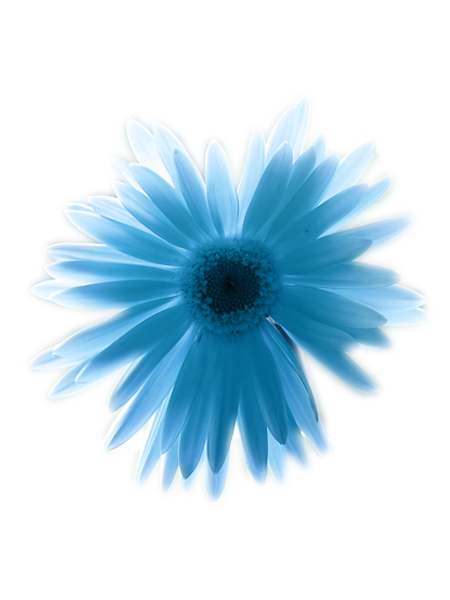 Fleurs bleue