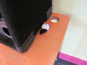 cache panda c