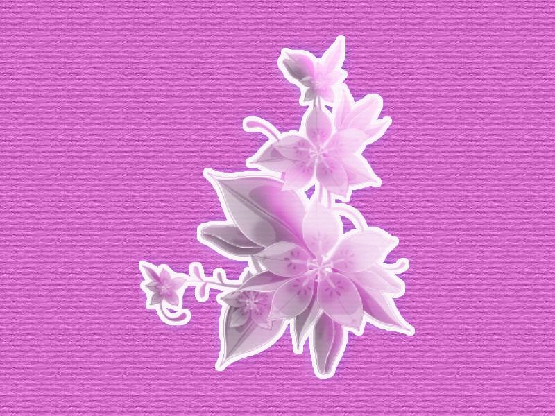 Fonds fleur page 1