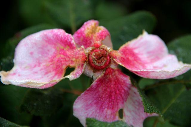 Le Roeulx 2016 - Du point de vue de la jardinière-blogueuse