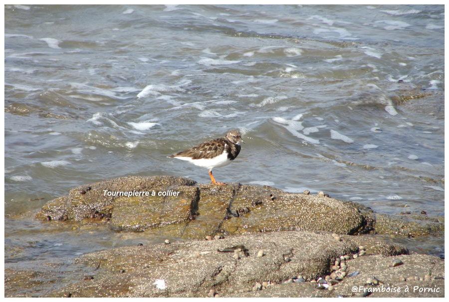Oiseaux de bord de mer