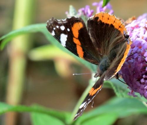 Quelques insectes de mon jardin vus cet été...