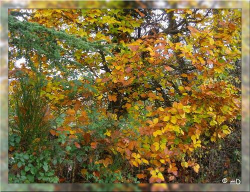 Fulminant automne, Marine DUSSARRAT