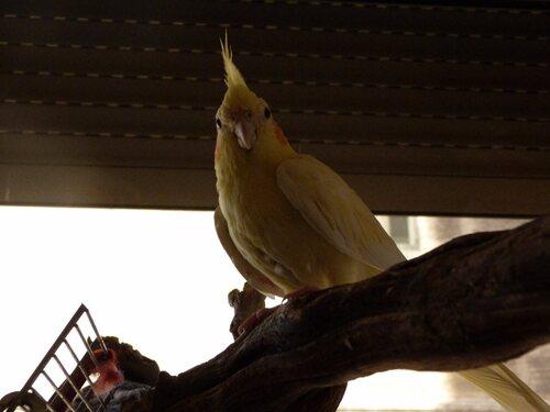 Je vous présente mes oiseaux