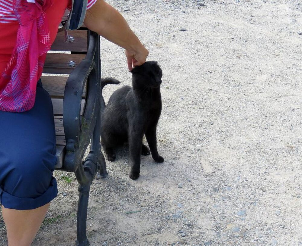 un minou noir au Roc St André