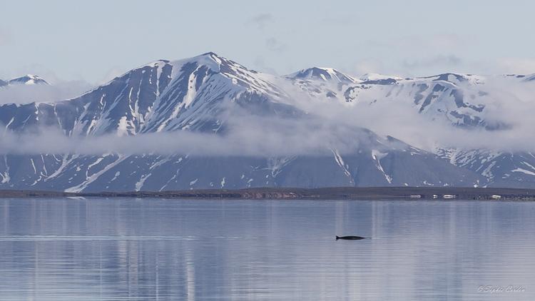 Liefdefjorden