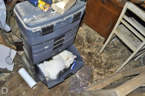 le somme du chat dans l'atelier