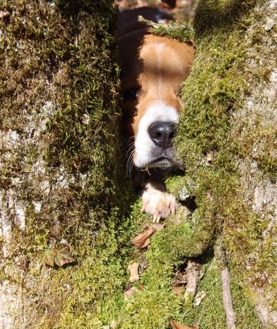 Blog de dyane :Traces de Vie, Camouflage...