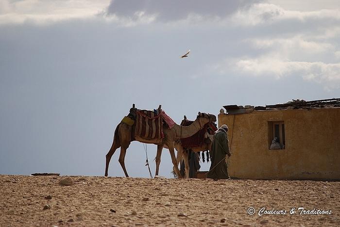 Saqqarah sous un ciel de Plomb