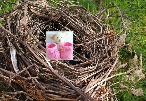 Les nids, la suite des amis !