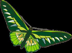 Papillons / 9