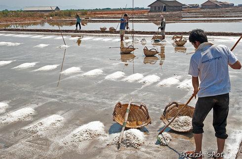 salines kampot - Paludier dans les marais salants