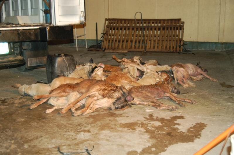 La Corée du Sud chamboulée : tuer les chiens pour les manger est illégal
