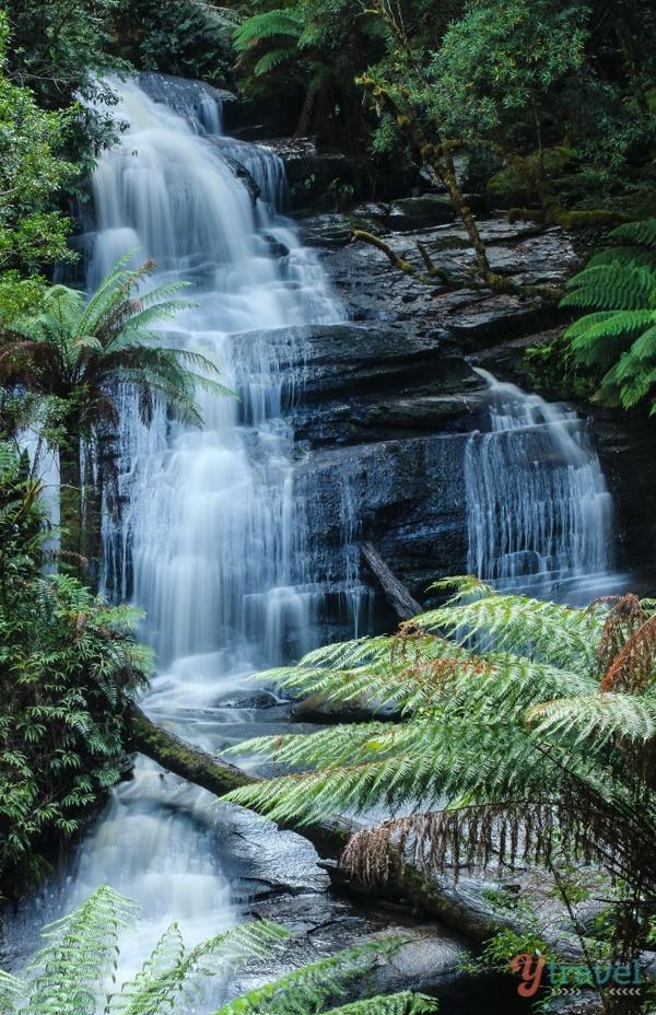 Great Otway National Park - Victoria