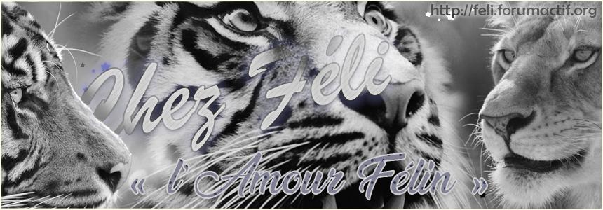 ♥ Féli's ♥