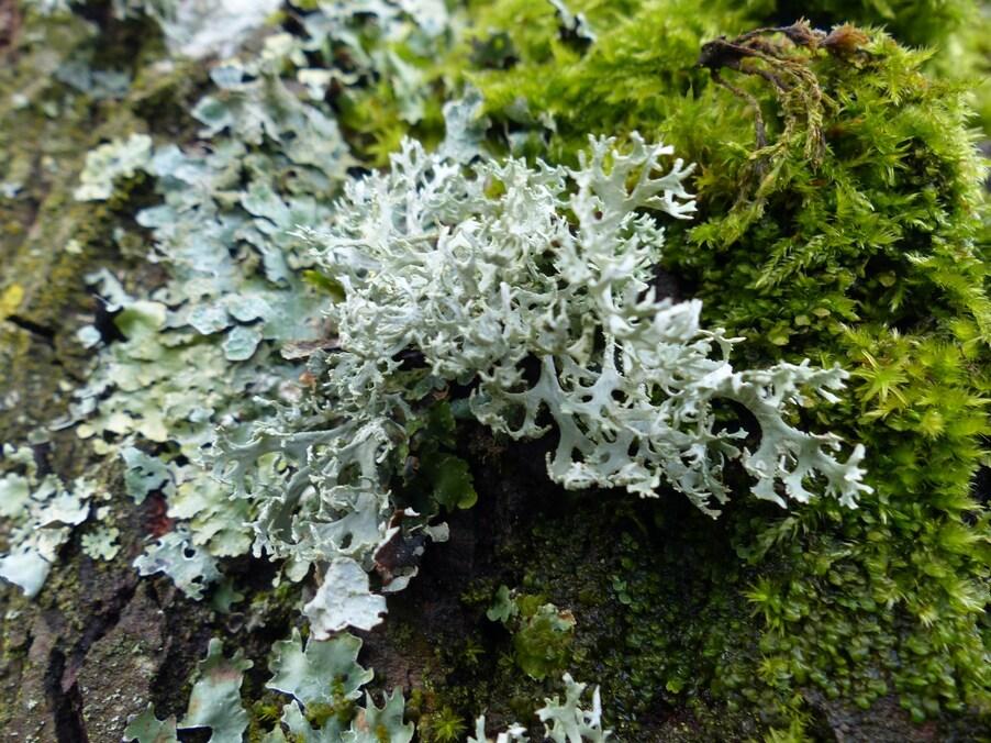 Champignons, mousse et lichen