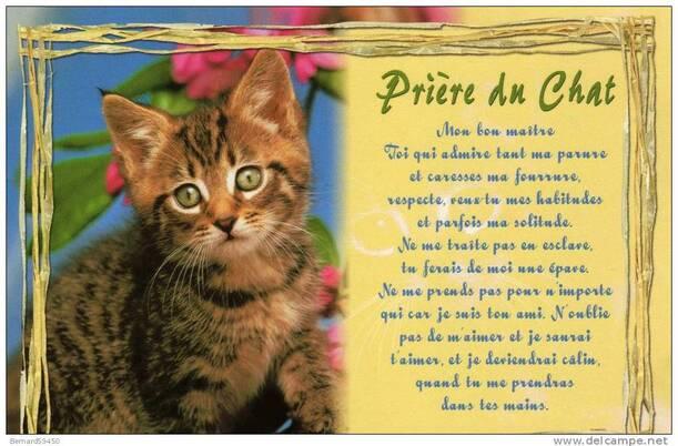 La prière du Chat