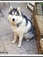 Laïcko (2,5 ans)