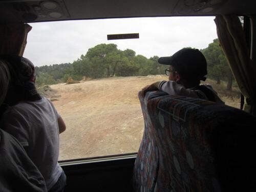 Sortie de fin d'année à la réserve africaine de Sigean.