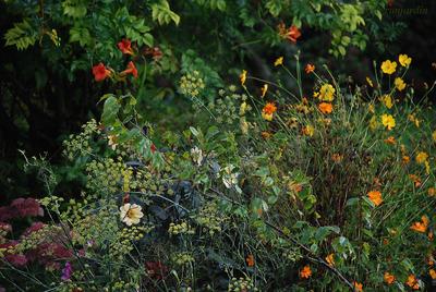 Florilège de septembre