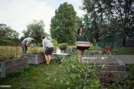 People working in community garden : Photo